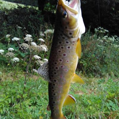joli poisson de 33cm